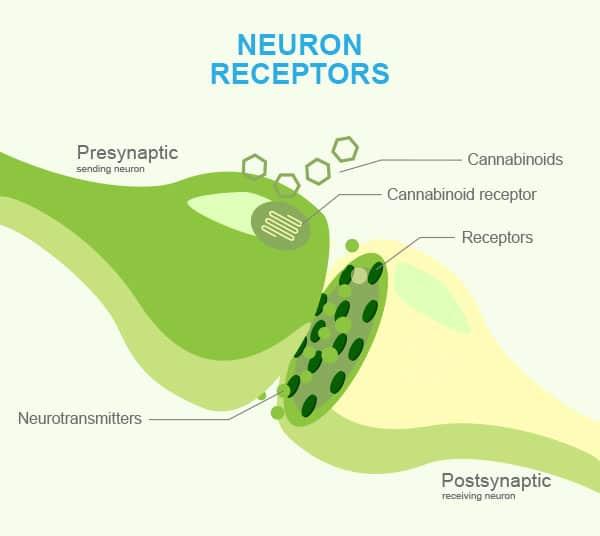 Neuron Receptor diagram by C4 Healthlabs